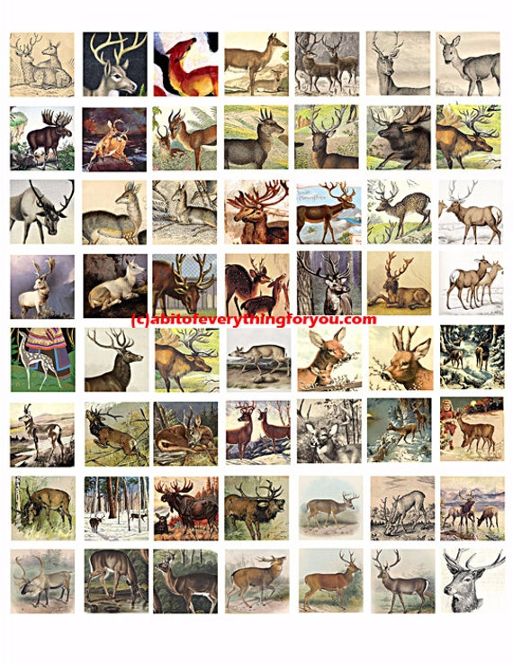 deer bucks does collage sheet 1 inch squares clip art digital download graphics images  animal nature art craft pendant pins printables