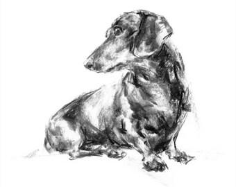 Dachshund Charcoal sketch, dog drawing - fine art dog print - Dachshund gift