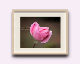 Rose wall art, rose decor, Rose photograph, pink rose decor, pink rose picture, pink rose wall art, decor for girl's room, wall art for home