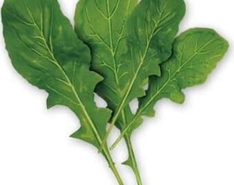 2000 ARUGULA Eruca Vesicaria Sativa Greens Vegetable Seeds