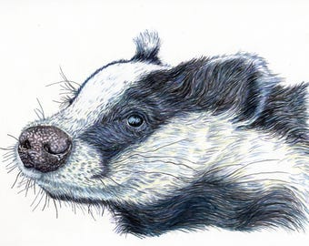 Print of an original pen and ink portrait of a badger A4 size