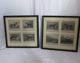 Eight Antique Equestrian Horse Engravings 1830 - 1868 Framed set