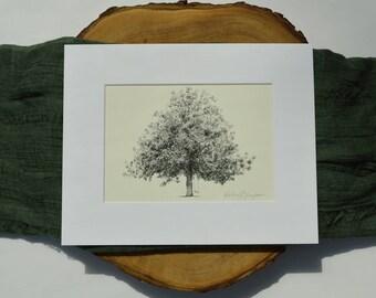 Magnolia Tree Drawing Fine Art Print in Natural - Gordonston Savannah