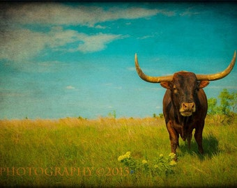 Fine Art Photograph Western Decor Rustic Wall Art Texas Longhorns American West Landscape