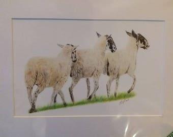 Origional Giclee print 'We'll Follow Ewe'