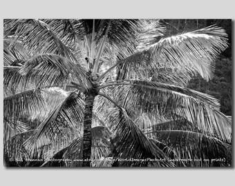 Backlit Palm Tree B&W Art Print Photography Photo Black and White  Hawaii Coconut Palmtree Tropic Island Fauna Silver Gray