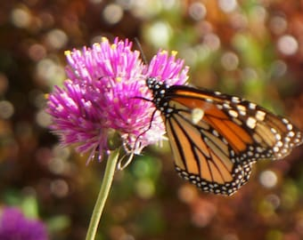 Photo Butterfly on Purple Flower