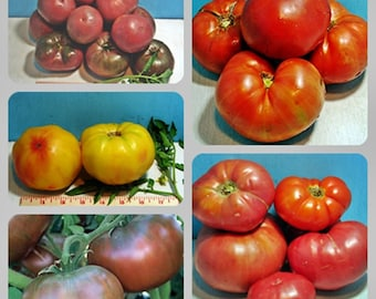 Favorite Slicer Tomato Collection Heirloom Garden Seed Non-GMO 4 Packets Naturally Grown Open Pollinated Gardening
