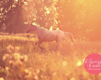 "Horse running at sunset photographic print, ""Spotted Runner"""