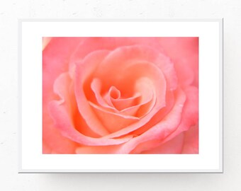 Pink Wall Art - Creamy Pink Rose Photograph, Printable Wall Art, Pink Art Print, Pink Wall Decor, Modern Art Print