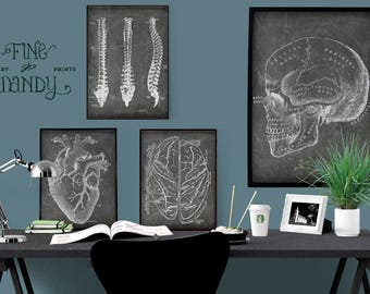 SET of 4: Doctor's Office Art, Anatomical Heart Print, Chalkboard Medical Illustrations, Skull Poster, Spine Illustration, Anatomical Brain