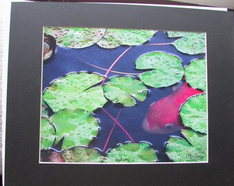 "New ""Santuary"" Koi * Lily Pads    Limited Edition Art print by MW James  Signed and Numbered"