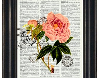 Pink Peony Flower and Post Card French Upcycled Art Print on Vintage Dictionary Book Page