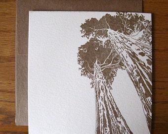 5-pack Redwoods letterpress flat cream notecards