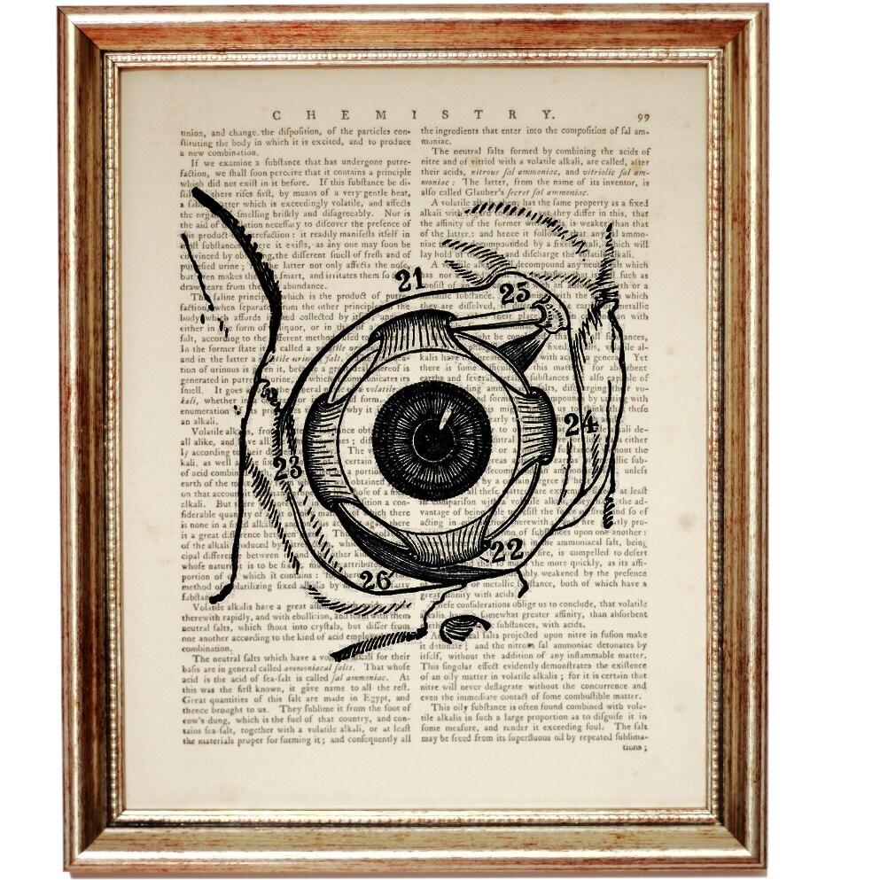 Eye Poster EYE ANATOMY PRINT Eyeball Anatomy Gift Art Print