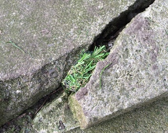 Fake Grass Disguised Geocache