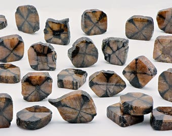 Polished Chiastolite Stone Slice - Stone for the Faithful & Spiritual