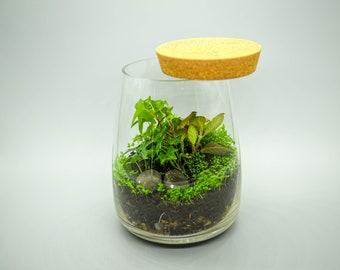 Terrarium Kit, DIY terrarium Kit with Glass Container and Cork Lid, Home decor