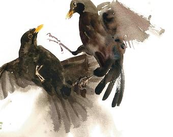 Blackbirds/Blackbirds Fighting/Blackbird Fine Art Giclée Print/Blackbird Watercolour Giclée Print