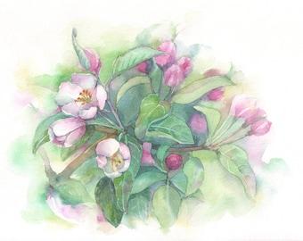 Cherry blossoms, original watercolour, spring, nature, green 26 cm x 18 cm