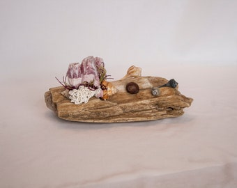 Driftwood with shells, barnacles and choral