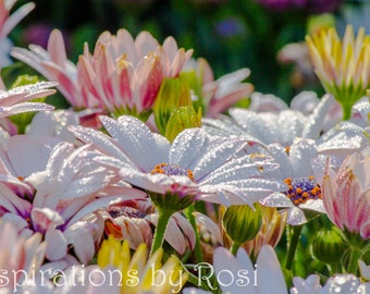 Lovely flowers with dew drops | Photography print | 4 x 6 inches | Photo postcard