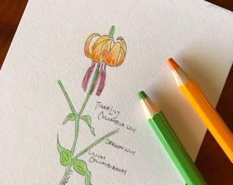Tiger Lily, Original Drawing