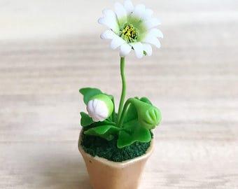 Miniature Flower,Miniature Flower Pot,Miniature Gerbera,Dollhouse Flower,Miniature Garden,Dollhouse Gerbera