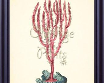 Shaw & Nodder Nautical Print Pink RED CORAL 8x10 Art Print Vintage Antique Plate 571 Sea Life Ocean Creatures Marine Wall Art Decor OL0908