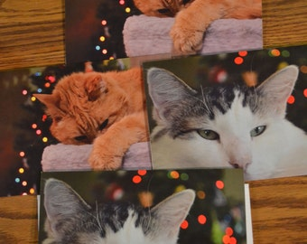Rescued Cat Christmas Cards