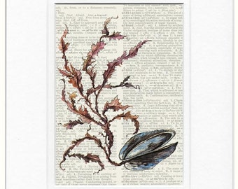 clam painting page print