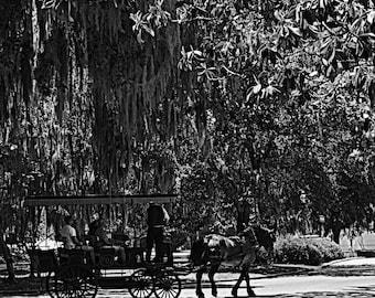 Savannah Scene carriage ride