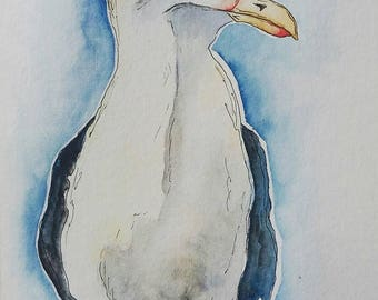 Seagull Seagull watercolor watercolor drawing drawing