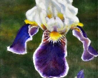 Iris in Meadow