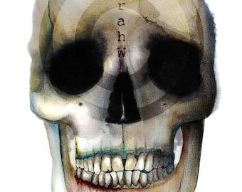 ORIGINAL watercolour/ink painting entitles 'Skull 1'; memento mori; vanitas; art print