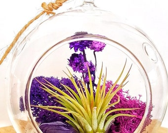 DIY Crystal Air Plant Terrarium Kit ~ Includes 4.5 Clear Glass Hanging Terrarium, accessories, and Live Tillandsia Plant / Perfect Gift!