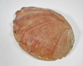 Giant Mexican Red Abalone Shell (221-G01)