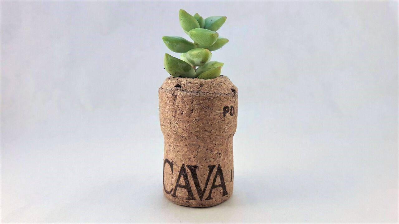 Succulent planter, modern cork plant pot, small planter, cork plant ...