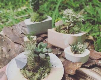 Miniature Concrete planters - Set of 3