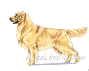 Golden Retriever Dog - Archival Fine Art Print - AKC Best in Show Champion - Breed Standard - Sporting Group - Original Art Print