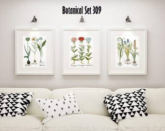 Botanical Print Set of 3, Framed Botanical Art, Vintage Floral Prints, Besler Botanical Plates, Lake House Decor, Botanical Print Sets
