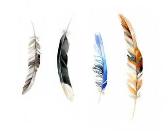 Feathers art, Watercolour Painting, Australian bird feathers, Giclee print