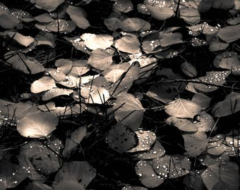 Aspen leaves fall photo, raindrops photo, Fall art, stardust art, Colorado photo, fall tree art, dark brown sepia art, rustic living room