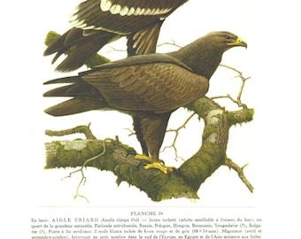 Spotted eagle art 1959 Vintage eagle print Bird lover gift Bird poster Bird print Bird art Bird print Vintage Eagle art Eagle poster