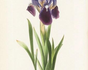"light FACIAL CREME ""iris"" (100 ml / 3. oz) for dry and sensitive skin"