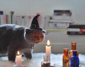Cat Costume - Witch Hat - Hissy Witch - Cat Halloween Costume - Pet Halloween Costume - Cat Photo Prop