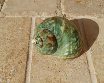 Turbo Shell -  Jade Turbo Shell - Natural Turbo - Polished Jade Seashell - Polished Jade Turbo - Pearlized Shell - No. 207
