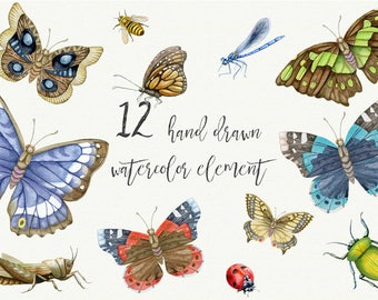 Watercolor cliparts with  butterflies and bugs. Digital watercolor clipart. DIY.