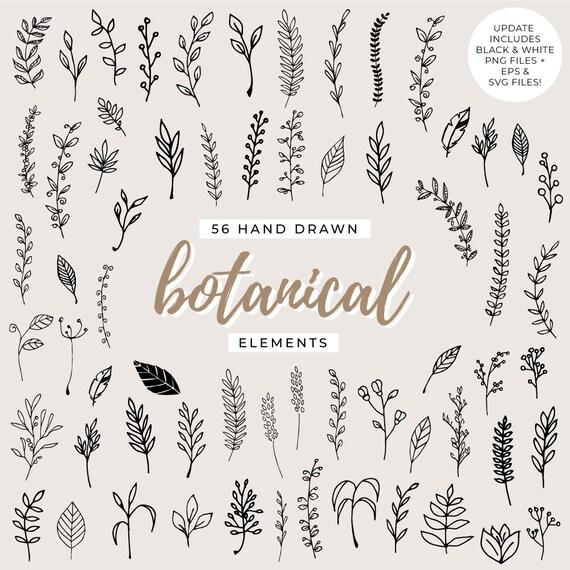 56 handgezeichnete botanische Elemente Blatt Clipart