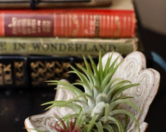 Clay Hand Air Plant Holder